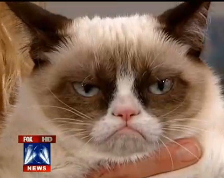 Grumpy Cat Now On Tumblr And Instagram Grumpy Cat 174