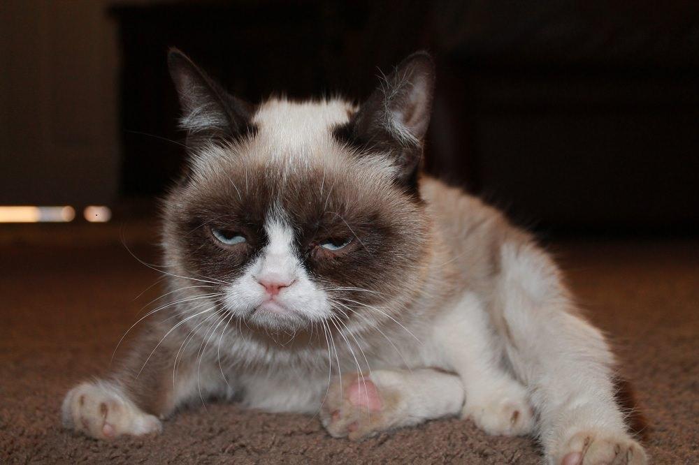 no grumpy cat quickmeme - 1000×666