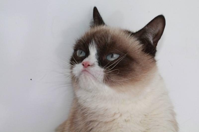 no grumpy cat quickmeme - 800×533