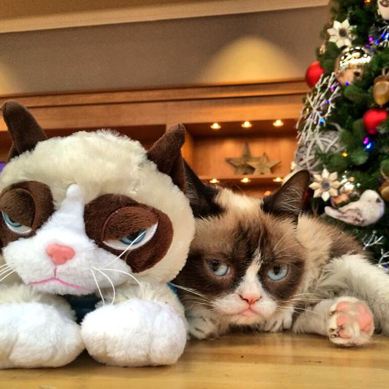 Christmas In July 2021 Qvc Grumpy Cat Takes Over Qvc S Christmas In July Grumpy Cat