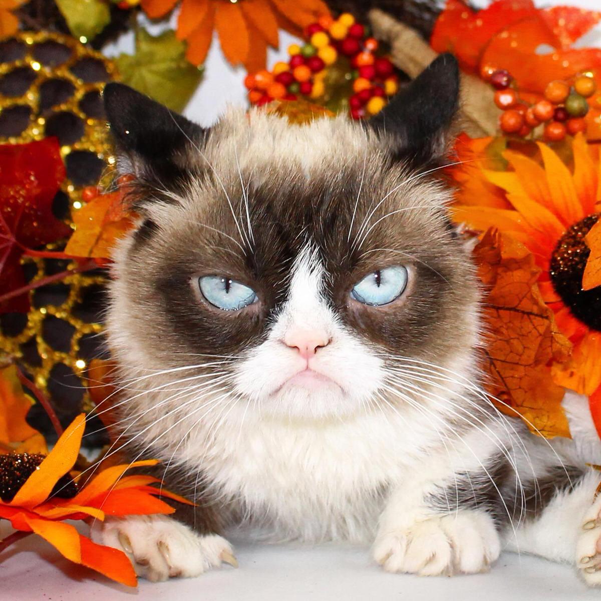 Happy Thanksgiving Grumpy Cat 174